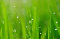 Gotas de la hierba y del agua Imagenes de archivo