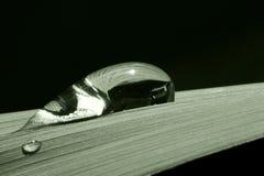 Gotas de la hoja Fotografía de archivo