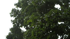 Gotas de la lluvia almacen de metraje de vídeo