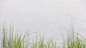Gotas de la lluvia en el río almacen de metraje de vídeo