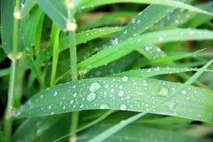 Gotas de la lluvia en la hierba fotos de archivo libres de regalías