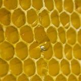Gotas de la miel Fotografía de archivo