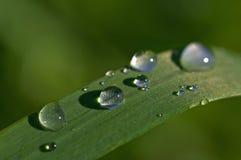 Gotas de lluvia Fotos de archivo libres de regalías