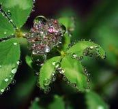 Gotas de lluvia Foto de archivo libre de regalías