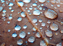 Gotas de lluvia brillantes en la hoja del roble Fotografía de archivo
