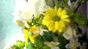 Gotas de lluvia del agua en las flores almacen de video