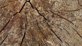 Gotas de lluvia el caer en la madera vieja del texturende almacen de metraje de vídeo