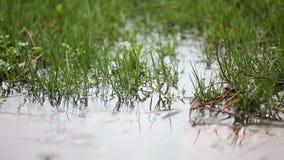 Gotas de lluvia en charco