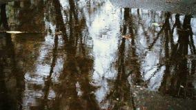 Gotas de lluvia en el charco almacen de video