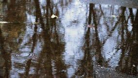 Gotas de lluvia en el charco metrajes