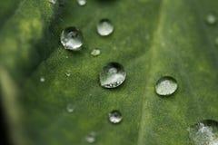 Gotas de lluvia en la hoja verde imagenes de archivo