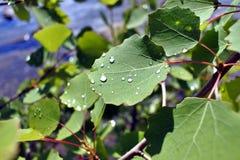 Gotas de lluvia en las hojas en tiempo soleado Foto de archivo