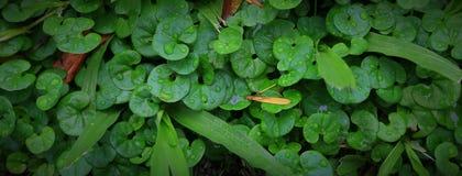 Gotas de lluvia en las hojas de pequeñas plantas fotos de archivo libres de regalías