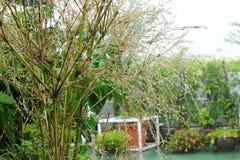 Gotas de lluvia en ramas Profundidad del campo baja Imagen de archivo