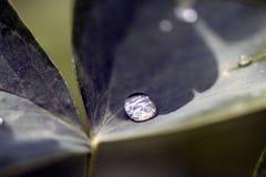 Gotas de lluvia en una hoja Foto de archivo