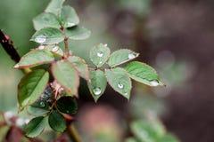 Gotas de lluvia mágicas Foto de archivo libre de regalías