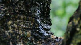 Gotas de lluvia que bajan de rama de árbol almacen de metraje de vídeo