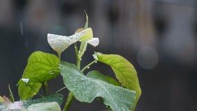 Gotas de lluvia que bajan en la planta metrajes