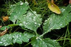 Gotas de lluvia que bajan sobre hierba verde imágenes de archivo libres de regalías