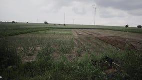 Gotas de lluvia sobre campos almacen de video