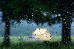 Gotas de lluvia sobre el vidrio de ventana Imagen de archivo libre de regalías