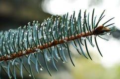 Gotas de lluvias Imágenes de archivo libres de regalías