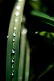 Gotas de orvalho Fotos de Stock