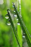 Gotas de orvalho Foto de Stock
