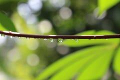 Gotas de orvalho Fotografia de Stock