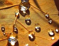 Gotas de orvalho Fotografia de Stock Royalty Free