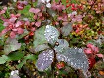 Gotas de orvalho da manhã em uma folha Fotos de Stock Royalty Free