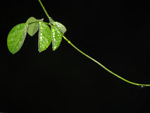 Gotas de orvalho de brilho no fundo das folhas fotografia de stock