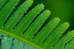 Gotas de orvalho em Fern Leaf Imagens de Stock Royalty Free