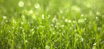 Gotas de orvalho em graas verdes. Close-up Imagens de Stock