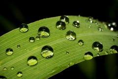 Gotas de orvalho em um fim da folha acima Foto de Stock
