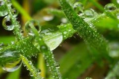 Gotas de orvalho em uma lâmina de grama Fotografia de Stock