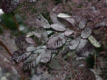 Gotas de orvalho em uma planta Foto de Stock Royalty Free