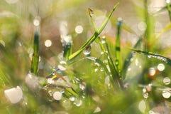 Gotas de orvalho frescas da manhã na grama imagem Imagens de Stock Royalty Free