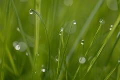 Gotas de orvalho na grama Imagem de Stock Royalty Free
