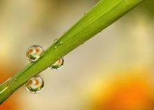 Gotas de orvalho na grama Imagens de Stock