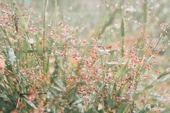 Gotas de orvalho na grama após o fundo fresco da natureza da chuva Fotos de Stock