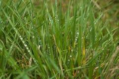 Gotas de orvalho na grama verde fotografia de stock