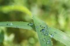 Gotas de orvalho nas folhas Fotos de Stock Royalty Free