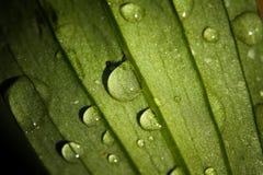 Gotas de orvalho nas folhas Imagens de Stock Royalty Free