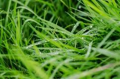 Gotas de orvalho nas folhas Imagem de Stock Royalty Free