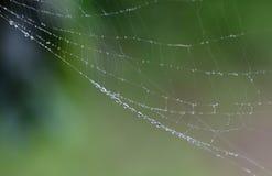 Gotas de orvalho no Web de aranha imagem de stock