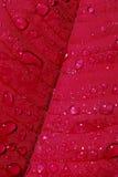 Gotas de rocío Fotografía de archivo libre de regalías