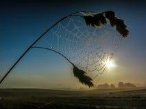 Gotas de rocío del web de araña Imágenes de archivo libres de regalías