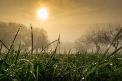 Gotas de rocío en el sol de la mañana Imagenes de archivo