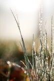 Gotas de rocío en hierba Imagen de archivo libre de regalías